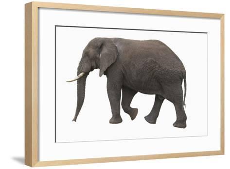 Indian Elephant Walking-DLILLC-Framed Art Print