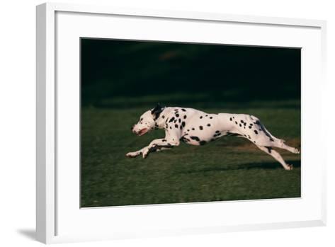 Dalmatian Running on Grass-DLILLC-Framed Art Print