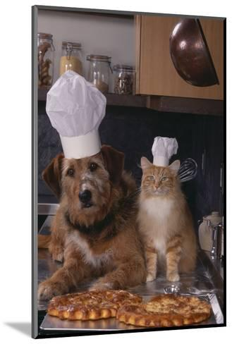 Dog and Cat Making Pizza-DLILLC-Mounted Photographic Print
