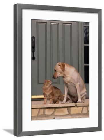 Cat and Labrador Sitting on Front Step-DLILLC-Framed Art Print