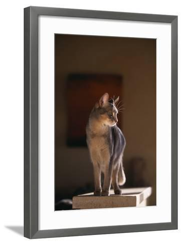 Abyssinian Blue Cat on Pedestal-DLILLC-Framed Art Print