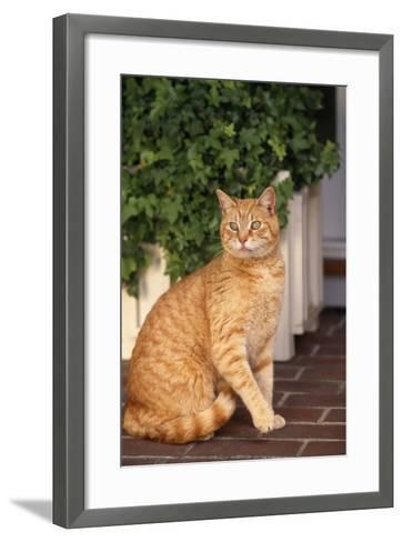 Yellow Cat Sitting on Cobblestone-DLILLC-Framed Art Print