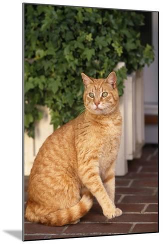 Yellow Cat Sitting on Cobblestone-DLILLC-Mounted Photographic Print