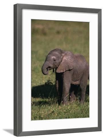Baby Elephant Curling up its Trunk-DLILLC-Framed Art Print