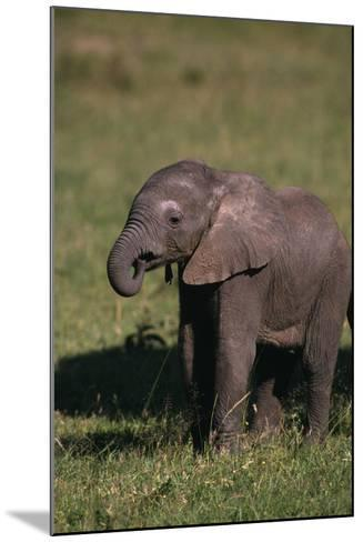Baby Elephant Curling up its Trunk-DLILLC-Mounted Photographic Print