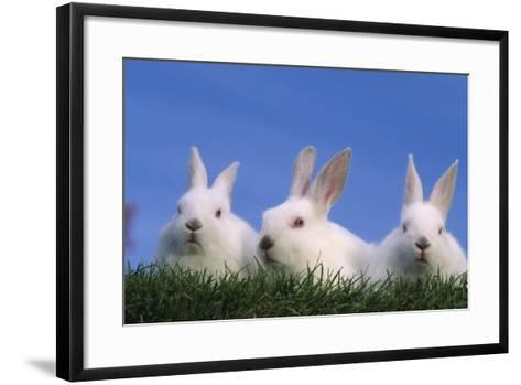 Domestic Rabbits in Grass-DLILLC-Framed Art Print