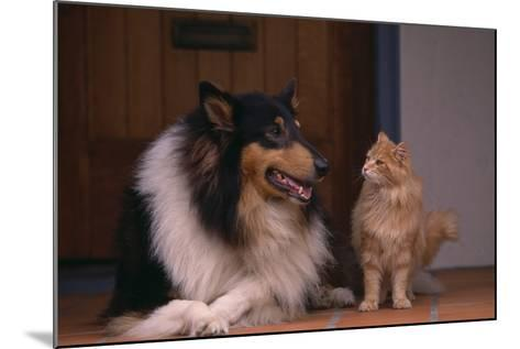 Collie and Cat Sitting on Front Step-DLILLC-Mounted Photographic Print