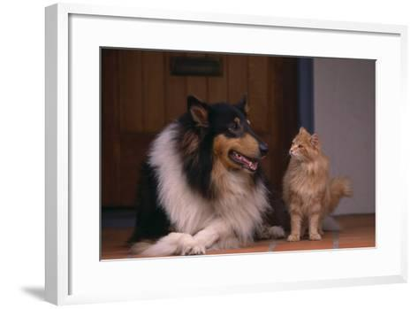Collie and Cat Sitting on Front Step-DLILLC-Framed Art Print