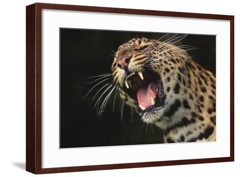 Leopard Growling-DLILLC-Framed Art Print