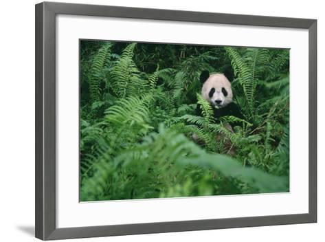 Giant Panda in Forest-DLILLC-Framed Art Print