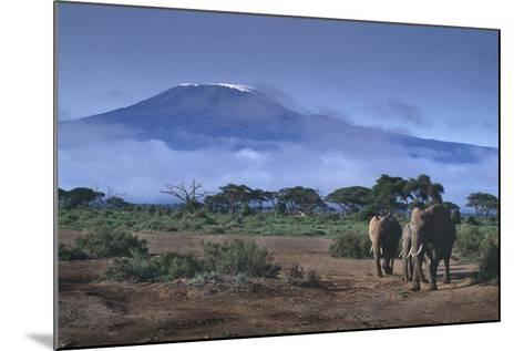 Elephants and Mountain-DLILLC-Mounted Photographic Print