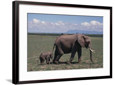 Elephant Adult and Baby-DLILLC-Framed Art Print