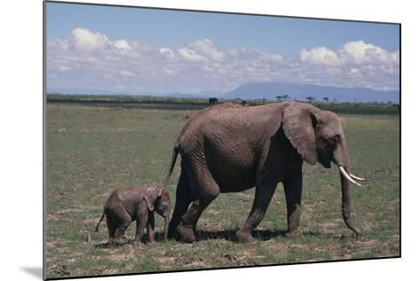 Elephant Adult and Baby-DLILLC-Mounted Photographic Print