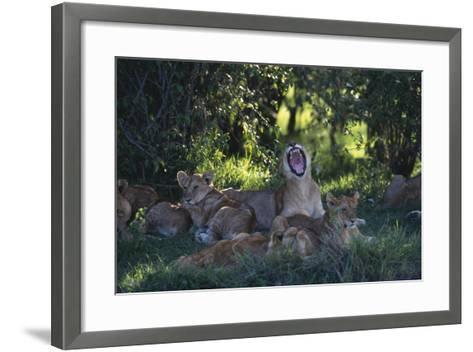 Lion Cubs Dozing under Trees-DLILLC-Framed Art Print