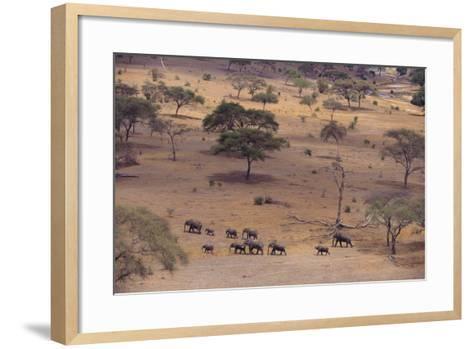 African Elephants Walking in Savanna-DLILLC-Framed Art Print