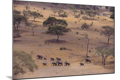 African Elephants Walking in Savanna-DLILLC-Mounted Photographic Print