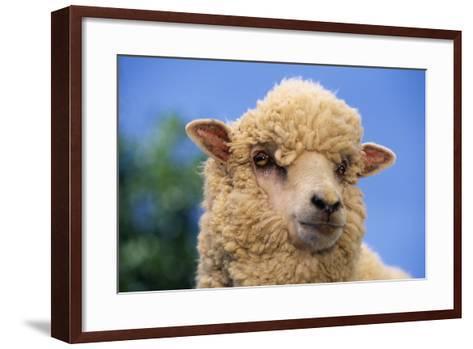 Sheep-DLILLC-Framed Art Print