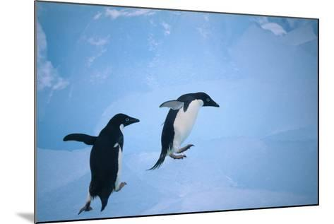 Adelie Penguins Climbing Ice Floe-DLILLC-Mounted Photographic Print