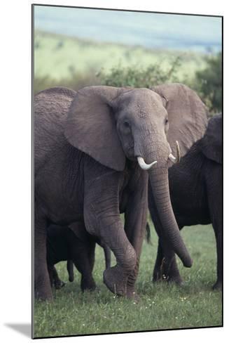 Elephant-DLILLC-Mounted Photographic Print
