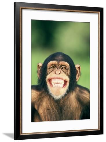 Grinning Chimpanzee-DLILLC-Framed Art Print