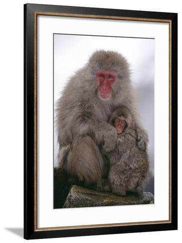Japanese Macaque with Baby-DLILLC-Framed Art Print