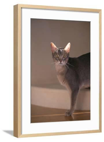 Abyssinian Blue Cat on Step-DLILLC-Framed Art Print