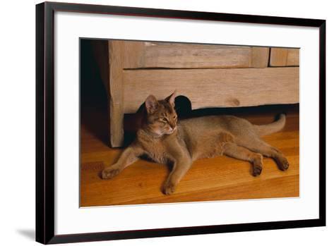 Abyssinian Cat Lounging on Floor-DLILLC-Framed Art Print