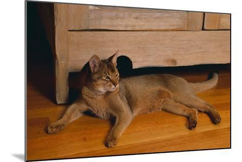 Abyssinian Cat Lounging on Floor-DLILLC-Mounted Photographic Print