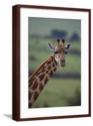 Reticulated Giraffe-DLILLC-Framed Art Print