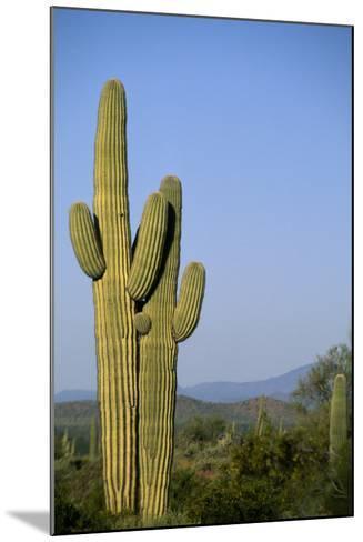 Saguaro Cactus in Desert-DLILLC-Mounted Photographic Print