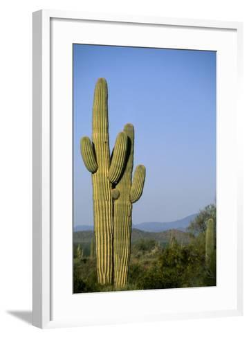 Saguaro Cactus in Desert-DLILLC-Framed Art Print