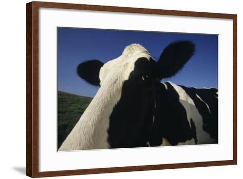 Holstein-DLILLC-Framed Art Print