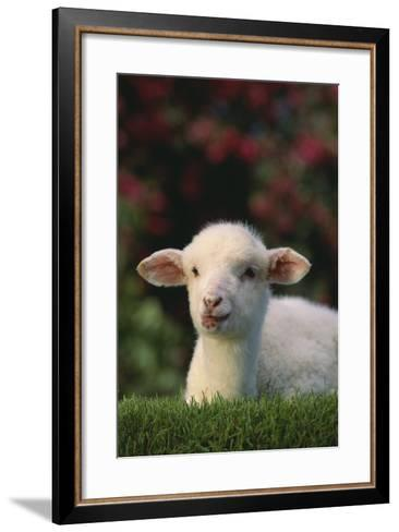Lamb in Grass-DLILLC-Framed Art Print
