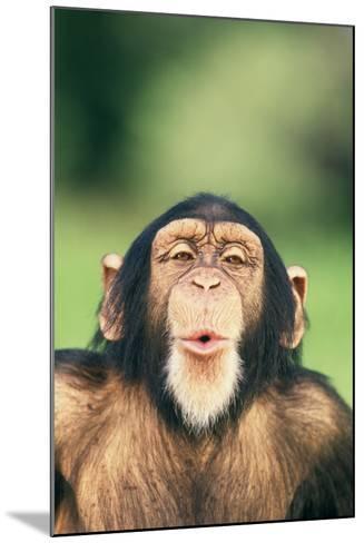Chimpanzee Puckering its Lips-DLILLC-Mounted Photographic Print