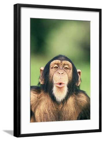 Chimpanzee Puckering its Lips-DLILLC-Framed Art Print