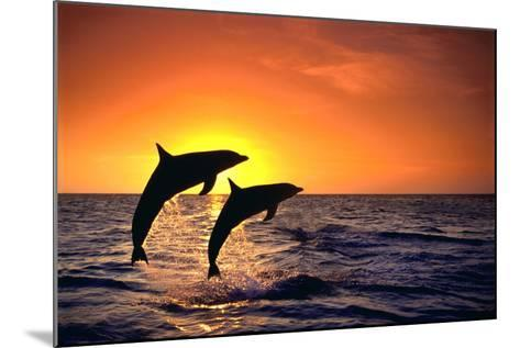 Bottlenosed Dolphins Leaping at Sunset-DLILLC-Mounted Photographic Print