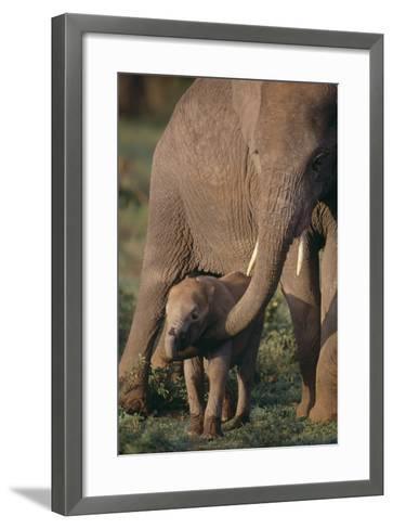 Adult Elephant Guarding Baby-DLILLC-Framed Art Print