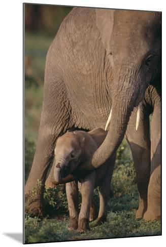 Adult Elephant Guarding Baby-DLILLC-Mounted Photographic Print