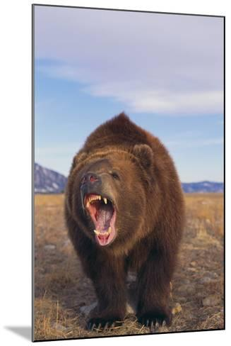 Roaring Grizzly-DLILLC-Mounted Photographic Print