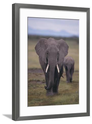 Adult and Young Elephant-DLILLC-Framed Art Print