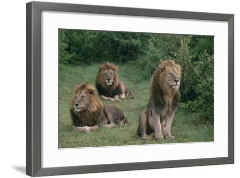Lions in Grass-DLILLC-Framed Art Print
