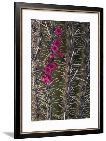 Flowers on Cactus-DLILLC-Framed Art Print
