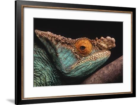 Parson's Chameleon on Branch-DLILLC-Framed Art Print