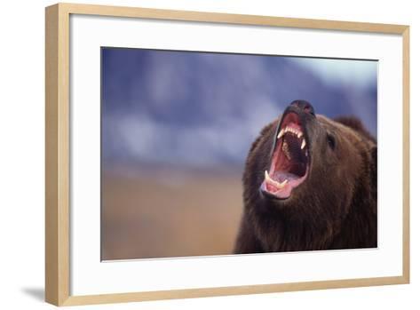 Grizzly Bear-DLILLC-Framed Art Print
