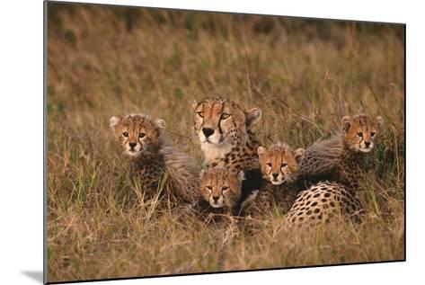 Cheetah Mother and Cubs-DLILLC-Mounted Photographic Print