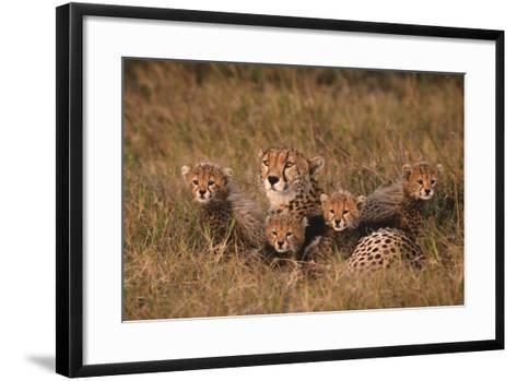 Cheetah Mother and Cubs-DLILLC-Framed Art Print