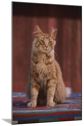 Orange Cat Sitting in Breeze-DLILLC-Mounted Photographic Print