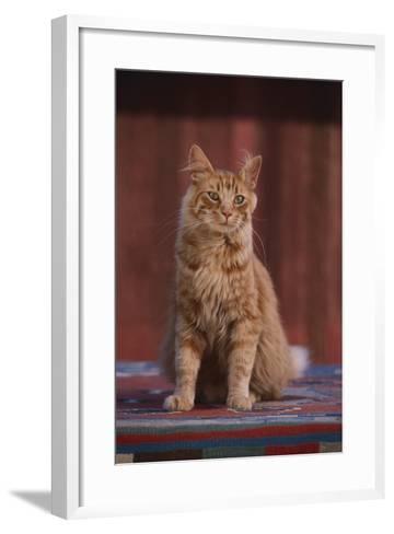 Orange Cat Sitting in Breeze-DLILLC-Framed Art Print