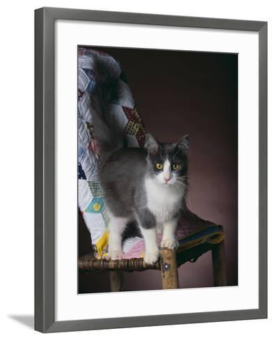 Young Cat Standing on Quilt-DLILLC-Framed Art Print
