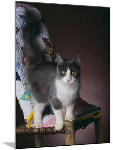 Young Cat Standing on Quilt-DLILLC-Mounted Photographic Print